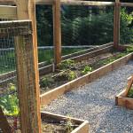 Vegetable Garden designed by Eve Mauger